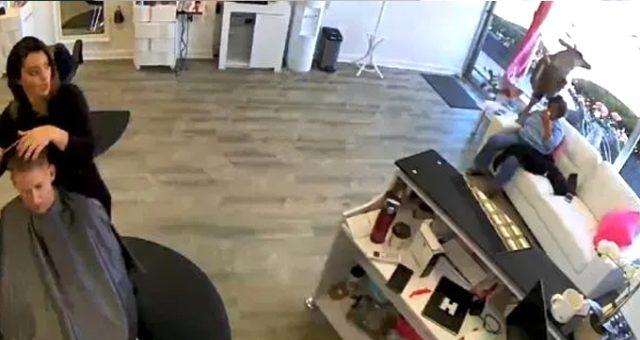 ABD'de bir geyik kuaför salonuna daldı! Panik anları kameraya yansıdı